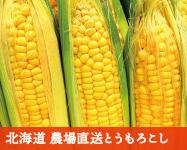沖縄県産マンゴー『ひめぎみ』おてんばちゃん
