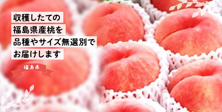 収穫したての福島県産桃を品種やサイズ無選別でお届けします